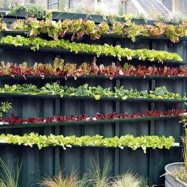 vertical farming picture by Blaine ONeill