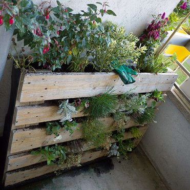 pallet garden picture by Stephanie Booth on Flickr